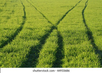 An image of a beautiful green lawn and traces of tires