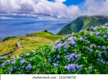 Image of beautiful landscape with hydrangeas and a path leading to the atlantic on the azores