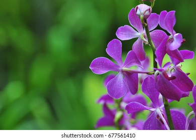 Image of beautiful purple flowers ( orchid) in garden closeup. shallow dept of field.
