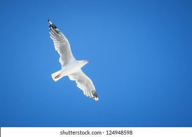 An image of a beautiful seagull in the bright blue sky