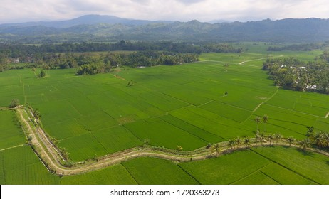 Image of beautiful Terraced rice field in water season and Irrigation from drone,Top view of rices paddy field in Aceh Indonesia