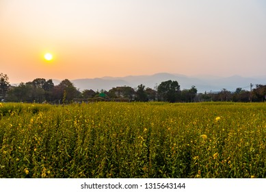 Image of Big mountain (Doi Suthep) with yellow pummelo field the  in the pollution fog, Chiang Mai Thailand.Small particle PM 2.5 micron in bad air come from farmer burning dry leaf to make the farm.