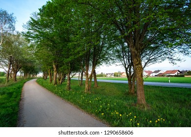 image of a bikeway and walkway with trees and grean meadow near Maisach, Bavaria, Germany