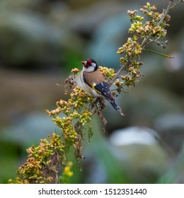 Image of a bird on a branch