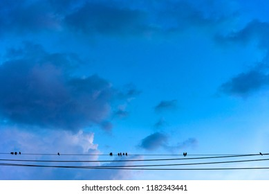 image of birds sitting on power lines with cloudy sky background.