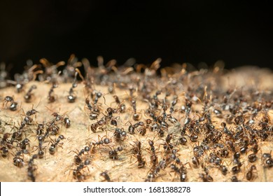 Image of black ant group on a natural background. Insect. Animal.
