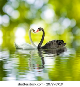 image of black and white swans in a heart shape