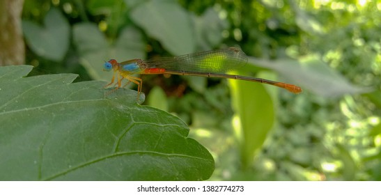 Image of blue eyed dragonfly in a garden/forest shutterstock.