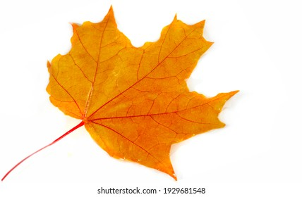 Image is blurry, multicolored maple leaves autumn background.
