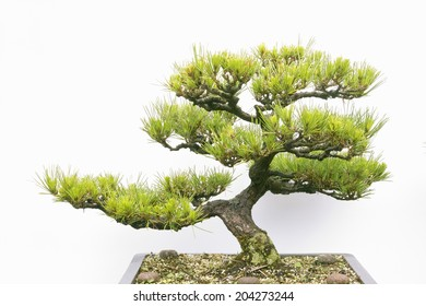 An Image of Bonsai