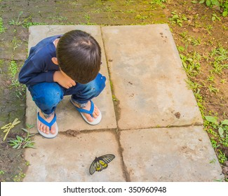image of a boy playing and exploring alive butterfly in garden.