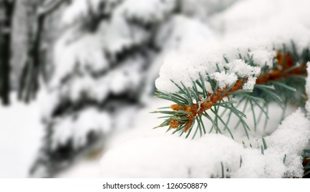 image of branch in the snow in park close up