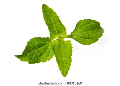An image of bright green plant on white background