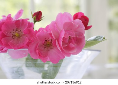An image of Bright Pink Rose