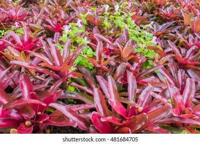image of Bromeliad in pot day time.