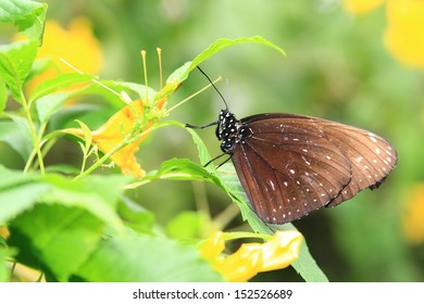 Image of a brown butterfly resting on a green leaf