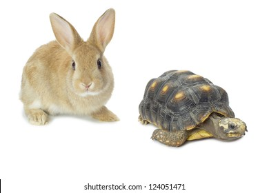 Image of bunny rabbit and tortoise against white background