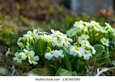 Image of bush garden flowers. Close-up with blurred background.