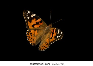 The image of a butterfly on a black background