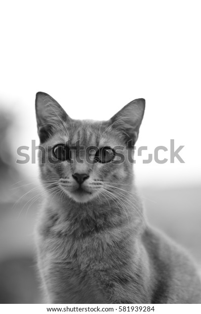 Image of a cat in black and white, with out of focus on certain body part due to bokeh effect.
