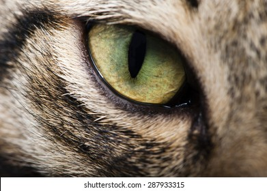 Image cat eye closeup