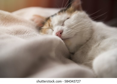 Image of cat relaxing on bed in the sunshine.