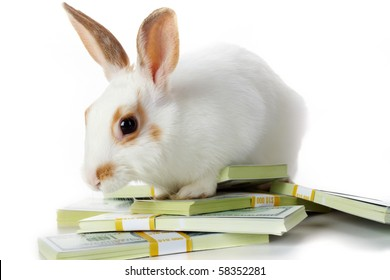 Image of cautious rabbit with dollar bills in isolation