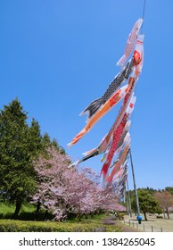 An image of 'Omoigawa' cherry blossoms bloomed and Koinobori, i.e. carp streamers, at Oyama Genral Park in Oyama, Tochigi, Japan in the middle of April, 2019.