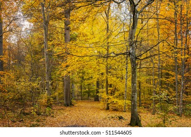 Image of coloful autumn forest path.