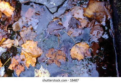 The image is of colorful fall leaves in a small pool.