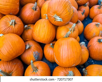 image of colorful halloween pumpkin background / with copy space - top view