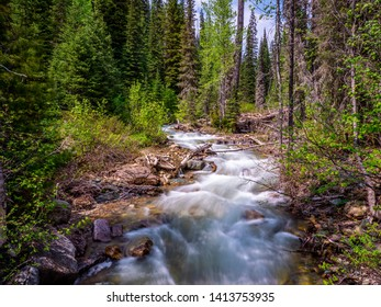 An image of a creek that shows the scars of a long tough winter in Flathead National Forest.