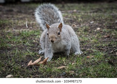 Image of a cute squirrel in the park