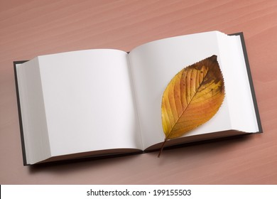 An Image of Dead Leaf