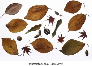 An Image of Dead Leaf Material