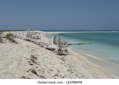 Image of dead trees at dry tortugas beach