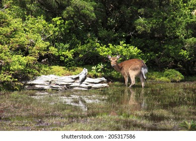 An Image of Deer