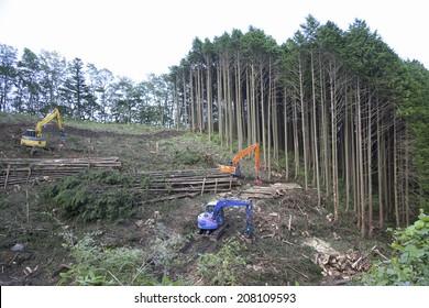 An image of Deforestation