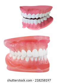 The image of dentures under the white background
