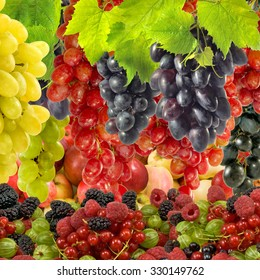 Image of different berries close-up