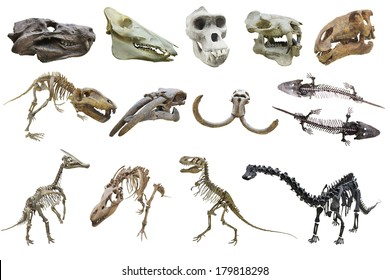 The image of dinosaur's skeletons