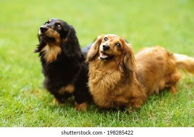 An Image of Dog