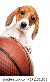 image of dog basketball white background