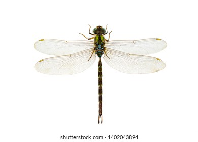 Hexapod Insects Images, Stock Photos & Vectors | Shutterstock