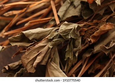 Image of dried Houttuynia cordata leaves