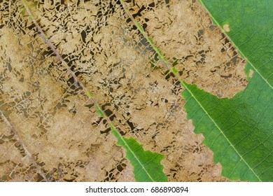 Image of a dried leaf fiber. Background Textures.