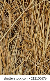 Image of Dried Yellow Hay Pattern Texture Background