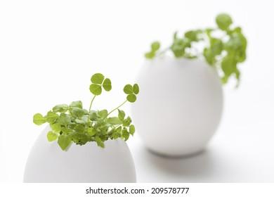An Image of Egg Plants