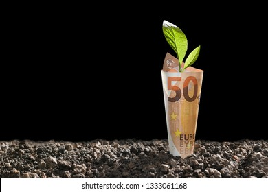 Image of EURO money banknote with plant growing on top for business, saving, growth, economic concept isolated on black background