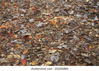 An Image of Fallen Leaves